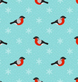 Winter seamless background with bullfinch vector image vector image