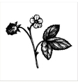 hand drawn strawberry plant vector image