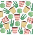 exotics cactus plants and ceramic pots pattern vector image