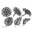 set hand drawn black and white gerbera vector image