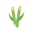 sugar cane icon vector image