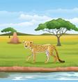 cartoon cheetah in savannah vector image vector image