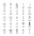 leaf icons set outline style vector image vector image