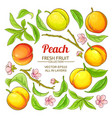 Peach elements set