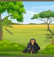 cartoon chimpanzee in savannah vector image vector image