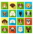 doberman dalmatian dachshund spitz stafford vector image vector image