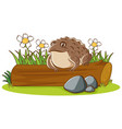 isolated picture brown toad on log vector image vector image
