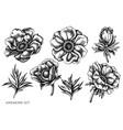 set hand drawn black and white anemone vector image