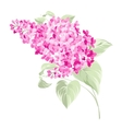 Spring syringa flowers background vector image
