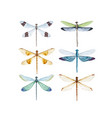 watercolor dragonfly set vector image vector image