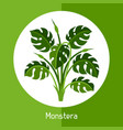 monstera of exotic tropical plant or vector image vector image