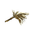 sketch wheat ears branch isolated vector image