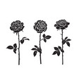 three black silhouettes rose flowers vector image