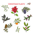 collection winter plants christmas design vector image
