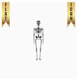 Skeletons - human bones vector image