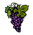 bunch of purple grapes with leaves isolated on vector image