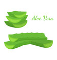 aloe vera slices cartoon flat style vector image