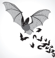 bat graphic art b vector image vector image
