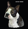 boston terrier colorful portrait vector image vector image