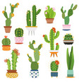 cactus pots home plants cacti flowers in ceramic vector image