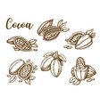 cocoa beans cacao pod plant sketch vector image vector image