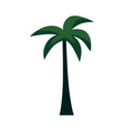 exotic palm tree for summer tropical design vector image vector image
