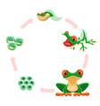 frog life cycle amphibian growth development