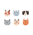 set different breeds cat muzzle flat vector image vector image