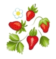 Set of ripe sweet strawberry and flower with vector image vector image