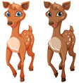 two fawns on white background vector image vector image