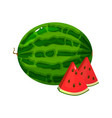 cartoon fresh watermelon isolated on white vector image