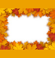 frame of fallen maple leaves vector image vector image