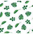 pattern tropical green leaves of plant palm and vector image