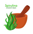spirulina algae pestle mortar cartoon vector image vector image
