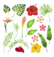 tropical flowers and leaves caribbean tropical vector image vector image