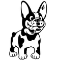 cartoon french bulldog black white vector image