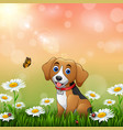 cartoon dog in the grass background vector image vector image