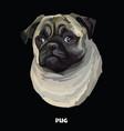 pug colorful portrait vector image vector image
