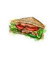 sandwich fast food from a splash of watercolor vector image vector image