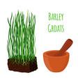 barley grass wheat mortar pestle cartoon vector image vector image