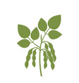 soybean silhouette vector image vector image