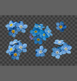 blue forget me not spring flowers decorative vector image vector image