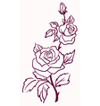 pale roses vector image