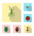 design insect and fly icon set of vector image vector image
