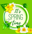 spring greeting card of dafodil flowers vector image vector image