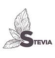 stevia natural sweetener leaf put in drink cup vector image vector image