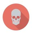 Anotomy skull vector image