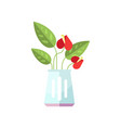 anthurium house plant indoor flower in pot vector image vector image