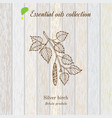 birch essential oil label aromatic plant vector image vector image