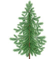 Christmas green spruce fir tree isolated vector image vector image